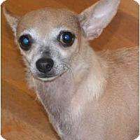 Adopt A Pet :: Lil Bit - Greensboro, NC