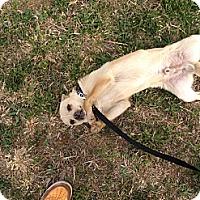 Adopt A Pet :: Mac - Albert Lea, MN
