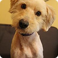 Adopt A Pet :: Trevor - Wytheville, VA