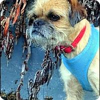 Adopt A Pet :: KOBY - ADOPTION PENDING - Los Angeles, CA