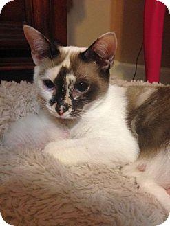 Domestic Shorthair Cat for adoption in Huntsville, Alabama - Sally M