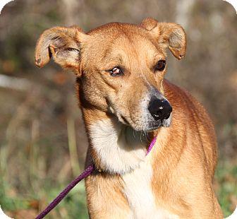 Terrier (Unknown Type, Medium) Mix Dog for adoption in Marietta, Ohio - Honey Bear (Spayed)