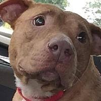 Adopt A Pet :: Julie - Mount Holly, NJ