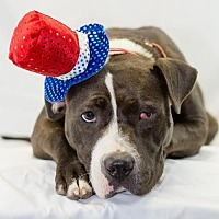 Adopt A Pet :: Joy - Little Rock, AR