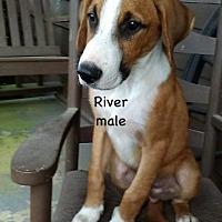 Adopt A Pet :: River Van Marion - Little Rock, AR
