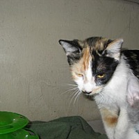 Adopt A Pet :: Carmel - Glendale, AZ
