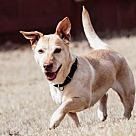 Adopt A Pet :: Carlie