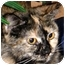 Photo 1 - Domestic Longhair Cat for adoption in Troy, Michigan - Angela & Sissy