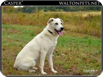 Labrador Retriever Mix Dog for adoption in Monroe, Georgia - Casper
