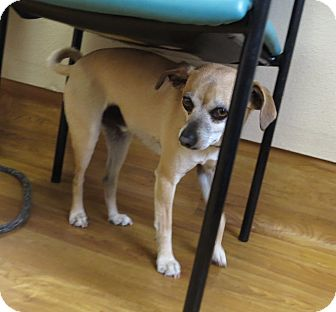 Chihuahua Mix Dog for adoption in Meridian, Idaho - Riley