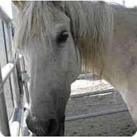 Adopt A Pet :: April - West Los Angeles, CA