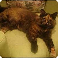 Adopt A Pet :: Pippi--PETSMART - Muncie, IN