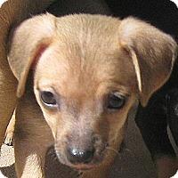 Adopt A Pet :: Baby Tyler - Oakley, CA