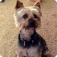 Adopt A Pet :: Indy (Ty) - LE MESA, CA