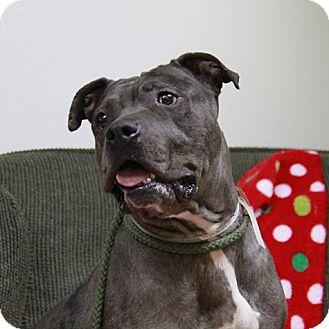 Catahoula Leopard Dog Mix Dog for adoption in Brookhaven, New York - Velma