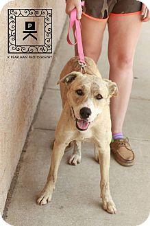 Plott Hound Mix Dog for adoption in Fredericksburg, Virginia - AL#15-1487