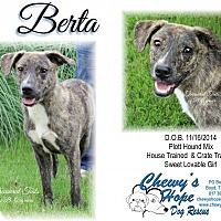 Pit Bull Terrier Mix Dog for adoption in Boyd, Texas - Berta