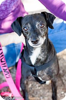 Chihuahua Mix Dog for adoption in Tucson, Arizona - George