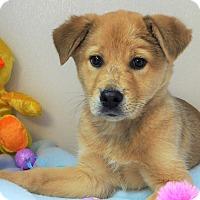 Adopt A Pet :: Cameron - Manning, SC