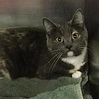 Adopt A Pet :: Sophie - Martinsburg, WV