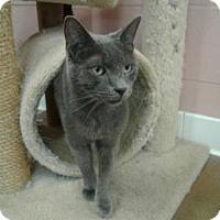 Adopt A Pet :: Watson - Lake Charles, LA