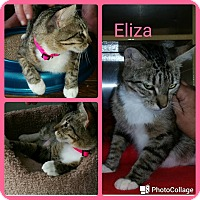 Adopt A Pet :: Eliza - Arlington/Ft Worth, TX