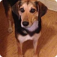 Adopt A Pet :: Elizabeth - Louisville, KY