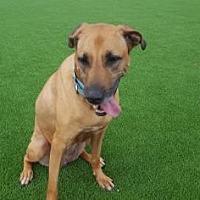 Adopt A Pet :: Petunia - Loxahatchee, FL