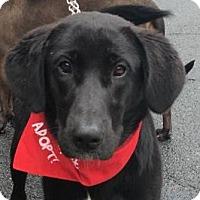 Adopt A Pet :: Brandy - Rockville, MD