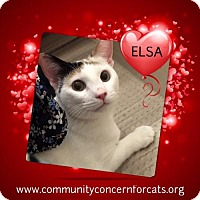Adopt A Pet :: Elsa - Walnut Creek, CA