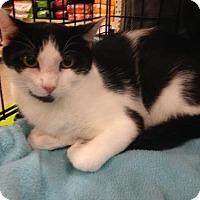 Adopt A Pet :: Sammy - Jenkintown, PA