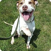 Adopt A Pet :: Tanner - Taylor, MI