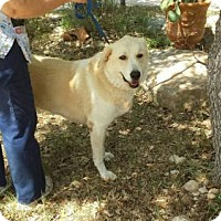 Adopt A Pet :: Nala - Olympia, WA