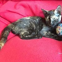 Adopt A Pet :: Zoey - Delray Beach, FL