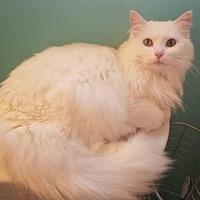 Adopt A Pet :: Magnolia - Newport, KY