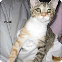 Adopt A Pet :: Paige - Catasauqua, PA