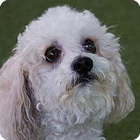 Adopt A Pet :: Astro - Mission Viejo, CA