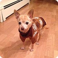 Adopt A Pet :: Thatcher - Chicago, IL