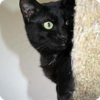Adopt A Pet :: Felicity - Santa Rosa, CA