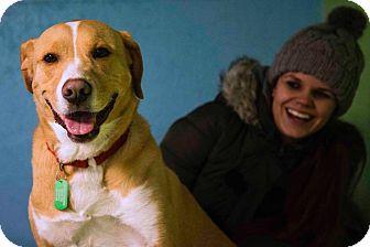 Labrador Retriever Mix Dog for adoption in Brunswick, Ohio - Henry