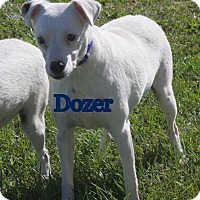 Adopt A Pet :: Dozer in Callao, MO - Austin, TX