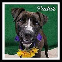 Adopt A Pet :: Radar - Gautier, MS