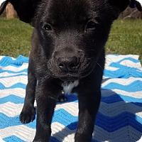 Adopt A Pet :: Allister-Adopted! - Detroit, MI
