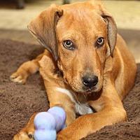 Adopt A Pet :: Ames - Rossville, TN