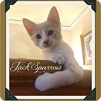 Adopt A Pet :: Jack Sparrow - Fort Worth, TX