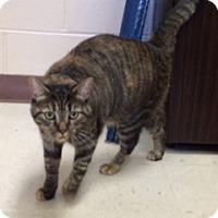 Adopt A Pet :: Tina (PV EW) - Trenton, NJ