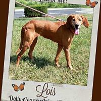 Adopt A Pet :: LOIS - Lincoln, NE