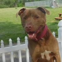 Adopt A Pet :: Junior - Louisville, OH