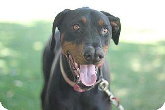Doberman Pinscher Mix Dog for adoption in Walla Walla, Washington - Ziva