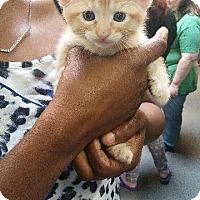 Adopt A Pet :: Cider - Raleigh, NC